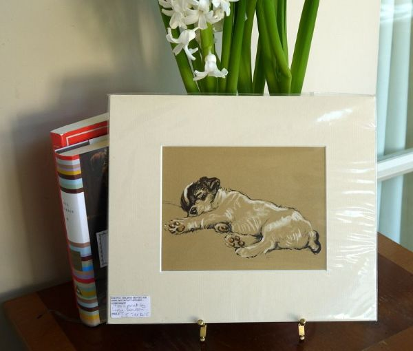 Little Terrier - asleep on his side 1930's print by Lucy Dawson - Ter D15